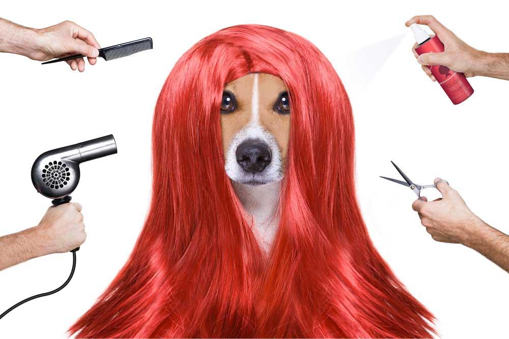 Hair Dye – Yeppi Pet Grooming